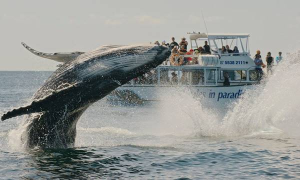 Whale Watch Tour, Gold Coast