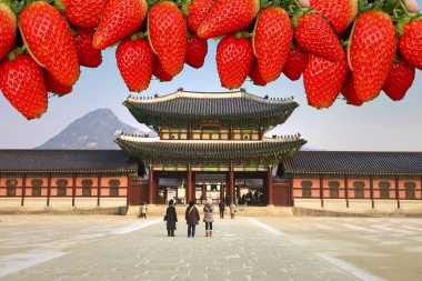 WIN A TRIP TO KOREA BY FEEDING YOUR SEOUL WITH STRAWBERRIES!