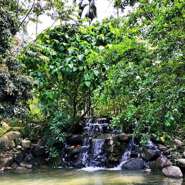 Chengal Hill Janda Baik