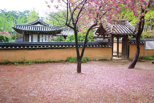 Experience Korean Tea Ceremony At This Beautiful Place In South Korea!
